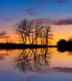 Trees Near Lake In Dusk Royalty Free Stock Photo