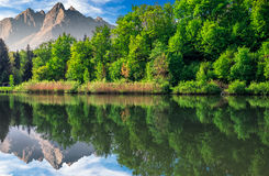 Trees near the lake in mountains Royalty Free Stock Image