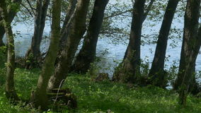 Trees near the Lake. Pan shot  of the vegetation flooded lake shore stock video footage