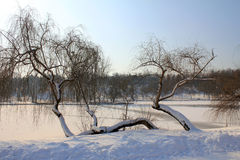 Trees near lake - winter Stock Image