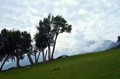 Trees at Sonamarg Kashmir India. Trees near the lakes at the Kashmir Great Lakes trek, which starts from Sonamarg to Naranag Village in Kashmir. This is an royalty free stock image