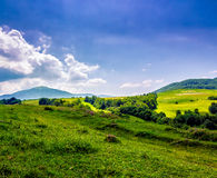 Trees near meadow in mountains  on hillside under cloudy sky Royalty Free Stock Photos