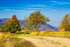 Trees near the meadow path in autumn mountains Royalty Free Stock Images