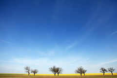 Trees near rape field. Stock Photo