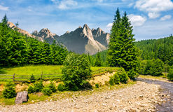 Trees near the river in mountains. Composite summer landscape with trees on a cliff nearthe shore. river at the foot of epic High Tatra mountain ridge. rocky Stock Photos