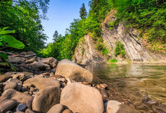 Trees near the river in mountains Royalty Free Stock Photos