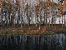Trees near river Royalty Free Stock Photos