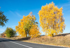 Trees near the road in the autumn Royalty Free Stock Photography