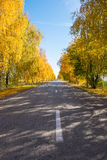Trees near the road in the autumn Royalty Free Stock Images