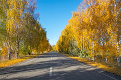 Trees near the road in the autumn Stock Image