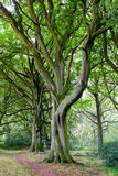 Trees, near Scarborough, England. Royalty Free Stock Photography