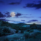 Trees near valley in mountains  on hillside in moon light Stock Photo