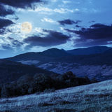 Trees near valley in mountains  on hillside in moon light Royalty Free Stock Photography