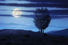Trees near valley in mountains  on hillside at night Royalty Free Stock Photo