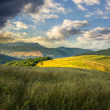 Trees near valley in mountains  on hillside under sky with cloud Stock Photo