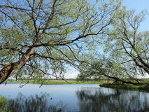 Trees near water, Lithuania Stock Image