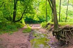 Trees near water stream in green forest. Stock Image