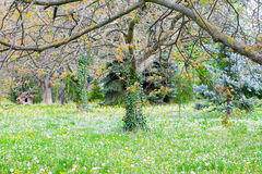 Trees with new leaves, Stock Images