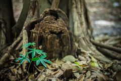 The trees newly born. From Thailand royalty free stock images