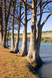 Trees next to river Royalty Free Stock Image