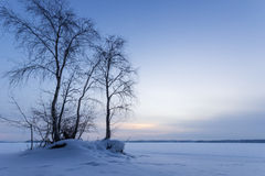 Trees next to a snowy lake Royalty Free Stock Image