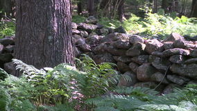 Trees next to stonewall (2 of 2). A view or scene from around town stock video footage
