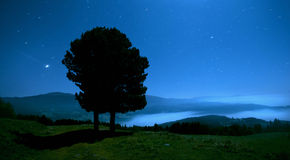 Trees in the night. Moonlight on the mountain Stock Photos