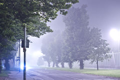 Trees at night in the fog Stock Photography