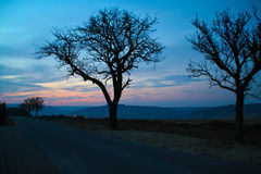 Trees at night. In the foreground two trees Royalty Free Stock Image