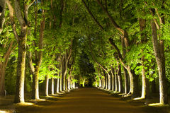 Trees by Night Stock Photos
