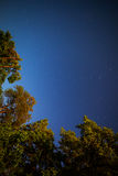 Trees and night sky. With stars Stock Image