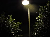 Trees at night Royalty Free Stock Images