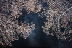Trees at night stock image