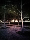 Trees at Night. In Chicago park Royalty Free Stock Photography