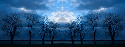 Trees at nightfall Royalty Free Stock Images