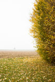 Trees in normandie. In France and in Autumn with leaves Royalty Free Stock Image