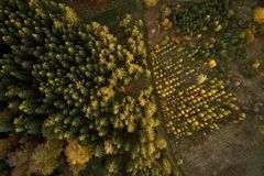 Trees in nursery at the forest from above royalty free stock images