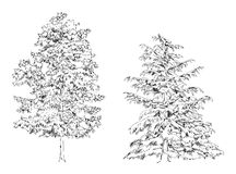Trees Oak birch fir and pine. Sketch collection. Sketch Stock Photography