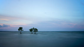 Trees and ocean in long exposure shot. Trees grow along a beach and when the tide rises, the bottom part of the trees are submerged in water. Image taken on an Stock Image