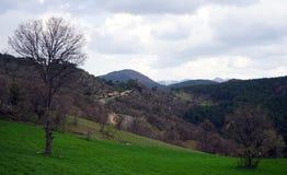 Trees och berg Royaltyfri Fotografi