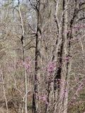 Trees och blommor arkivbild