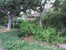 Trees och buskar Arkivfoton
