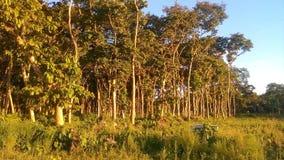 Trees och buskar Arkivfoto