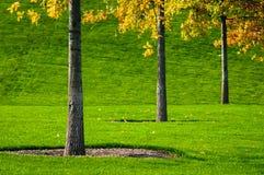 Trees och gräs Royaltyfria Bilder