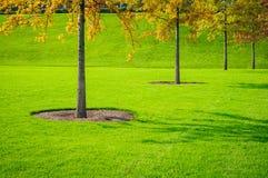 Trees och gräs Royaltyfri Bild
