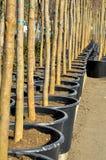 Trees och krukar Fotografering för Bildbyråer
