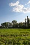 Trees och lawn Arkivfoto