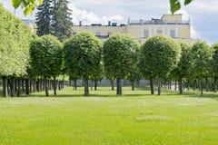 Trees och lawn royaltyfria bilder