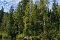Trees och moln Royaltyfria Bilder