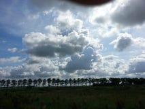 Trees och moln Royaltyfri Fotografi